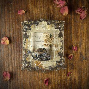 miniature cadre resine fleurs séchées crane chat immortelle
